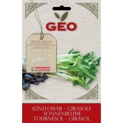 Girasole  - Buste semi Bio-Organic
