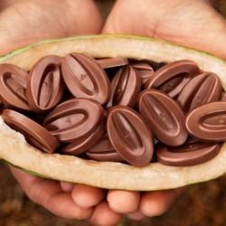Azelia cioccolato al latte 35% Valrhona - g 300